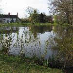 The village pond opposite the pub