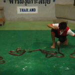 Samui Snake Farm