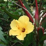Just one of many gorgeous hibiscus at Steppingstones