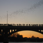 Congress Avenue Bridge / Austin Bats