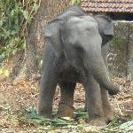 Baby Elephant near Ponmala Homes