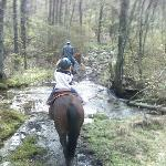 Waterfall trail ride at Shady Grove Dude Ranch