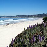  Carmel Beach from Scenic Road