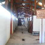Photo of Haras Ampascachi