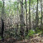  Okefenokee Swamp trail