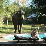 Papa with an elephant on the pool
