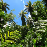 Jungle Tours St. Lucia