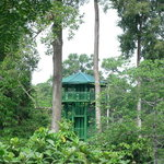 Sandakan Rainforest Discovery Centre (RDC)