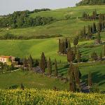  A famous Tuscan scene just outside of Montecchiello