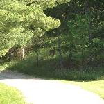 The Driveway to the B&B (notice the deer)