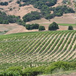 wine country vineyards