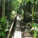 Highlands Hammock State Park