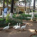 Swan beach resort by vishal