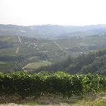 View of the vineyards from the hotel