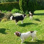  Ben, Finn with their two guests in the garden