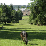 Wildpark Schloss Tambach