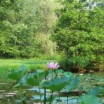  Pine Haven Lilly Pond