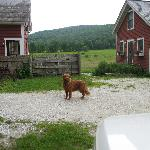 Foto de White Rocks Inn Bed and Breakfast