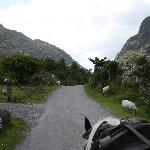  Pony and trap ride, looking toward the Gap of Dunloe - beautiful!