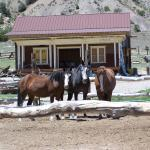 The Brass Ring Ranch