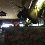 Enjoy your meal at Ole's under a giant moose head, with a polar bear nearby