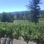 Vineyards at Handley Winery
