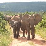 Travellers Mwaluganje Elephant Camp照片