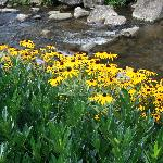 Hotel mountain stream with flowers