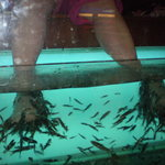 Kenko Fish Spa
