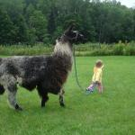  Lily and Llama