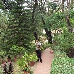 Lush Green Gardens...even in Summers