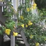 Yellow Bella Houseの写真