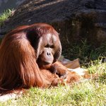 Auckland Zoo