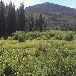 More Beaver Meadows