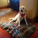 Grace - the hotel's resident dog.