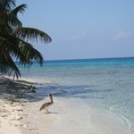 Photo of Laughing Bird Caye National Park