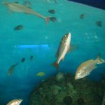 Aquarium of Veracruz