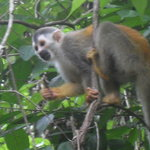 Manuel Antonio Expeditions Foto
