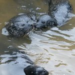 Seals in the seal pool