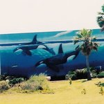Whaling Wall