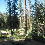 Photo of Dorst Campground
