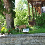 Deer on the lawn of the Sanders