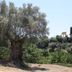 Il Giardino della Kolymbetra