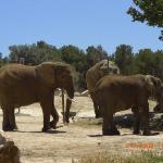Attractions nearby-African reserve