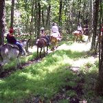 Mules on the trail