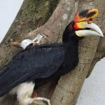 Photo of Penang Bird Park