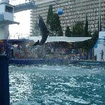 Dolphin Show, Hotel in background
