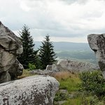 ‪Dolly Sods Wilderness Area‬