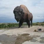Thats one Big Buffalo