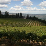 Schweiger Vineyards